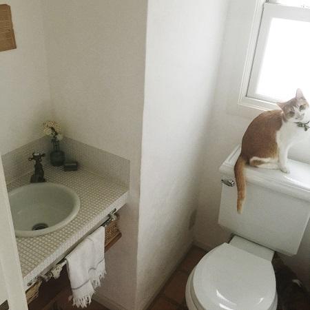 ネコとトイレ
