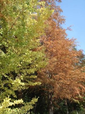 四季の森2