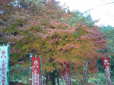 小原区内の神社の紅葉