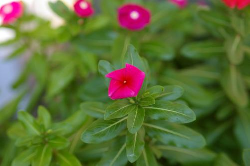 生えてた花