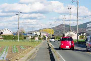 銀杏への道