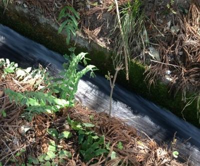 芦見谷からの水