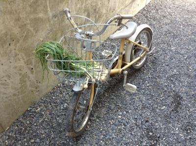 ノビルと自転車