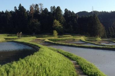 棚田散歩2