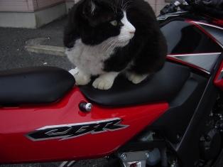 バイクにゃーん