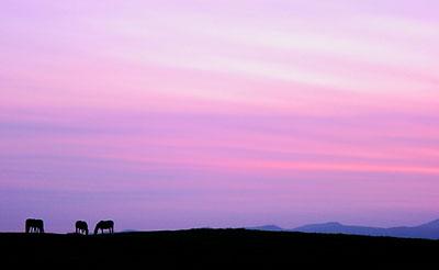 夕日と馬と稜線と
