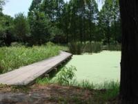 水元公園(夏)4/水生植物