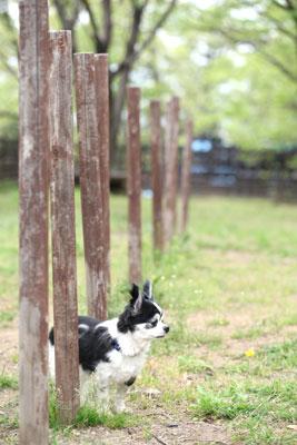 動物写真家 高田千鶴の愛犬日記 yamato days