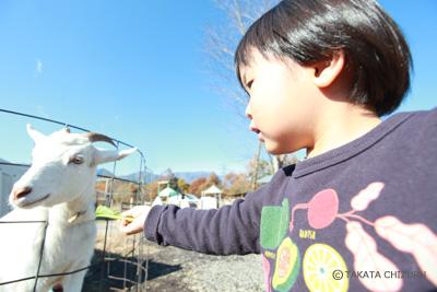 イクケンやまとの子育て奮闘記 - 動物写真家 高田千鶴の愛犬日記