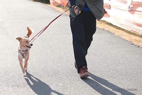 保護犬のんちゃんとの生活