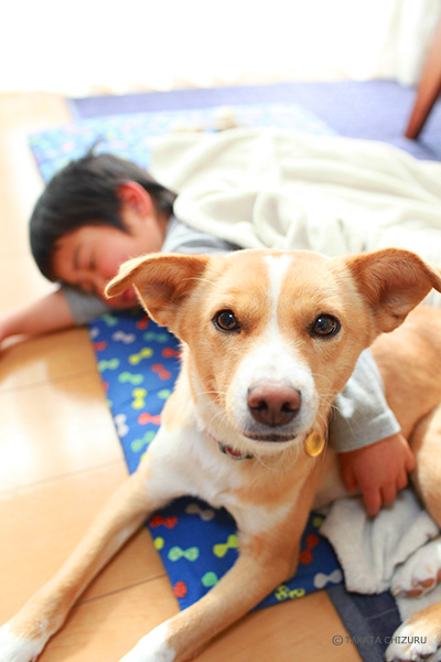 保護犬のんちゃんとの生活 トライアル中
