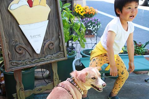 保護犬のんちゃんとの生活 愛犬と一緒の子育て
