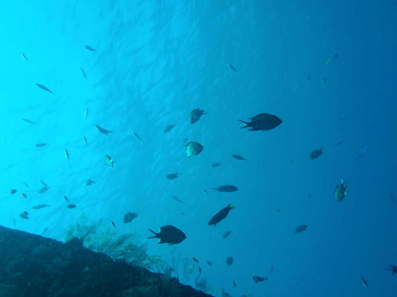 魚がいっぱい