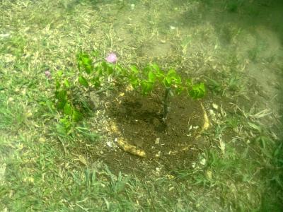 ヴィラの庭1