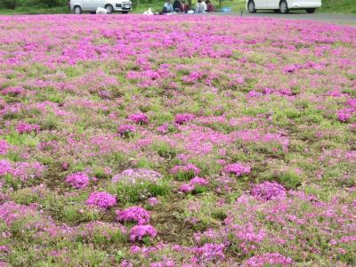 花の丘・芝桜