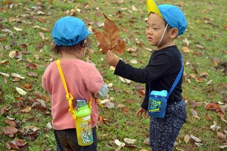 11月18日久良岐公園 (88).JPG