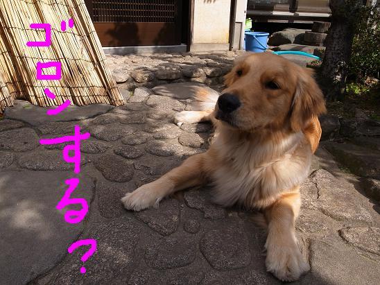 ゴロンする?.JPG