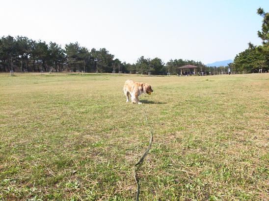 芝生とどうか.JPG