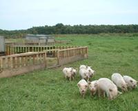 興農ファームの放牧
