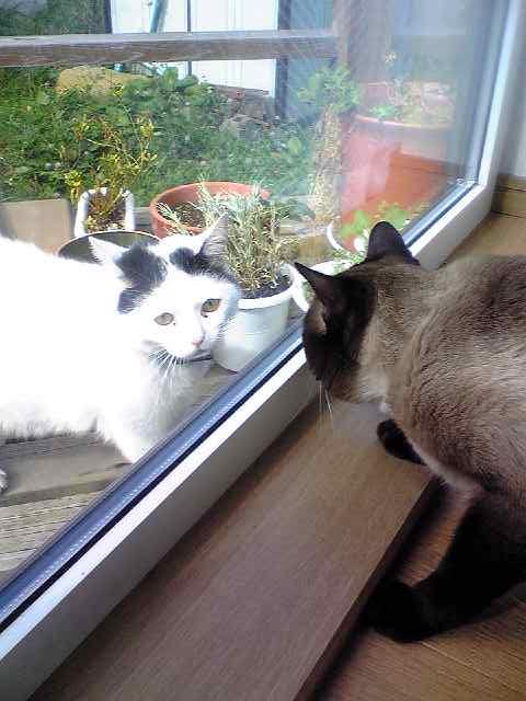 窓越しの恋-猫写真
