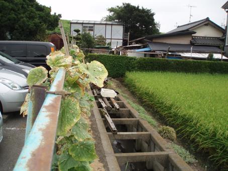nagashima kome