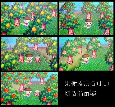 の 森 果樹 園 どうぶつ
