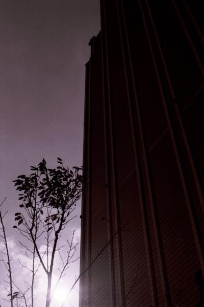 Canon EOS 7s(35mm)Kodak-Tri-X400