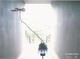 加藤文子の植物 DMカード
