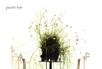 EXHIBITION 加藤文子 — 草のカタチ 木のカタチ