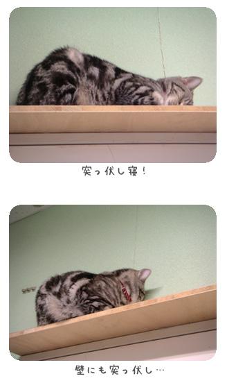 突っ伏し!!
