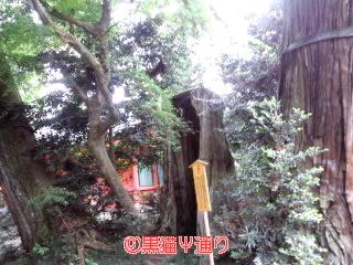 三本杉.jpg