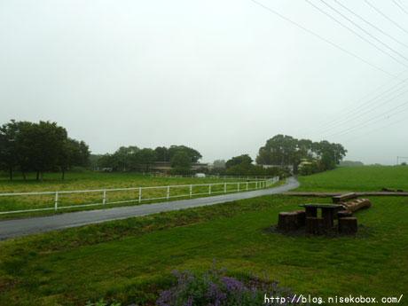 雨の草地…