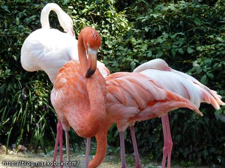とべ動物園フラミンゴ