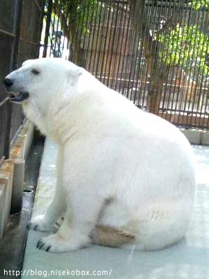 とべ動物園ピース1