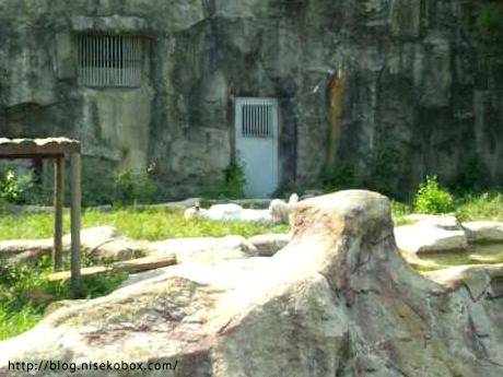 とべ動物園ホワイトタイガー