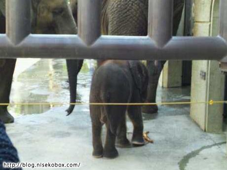 とべ動物園子象1