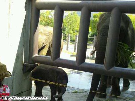 とべ動物園子象2