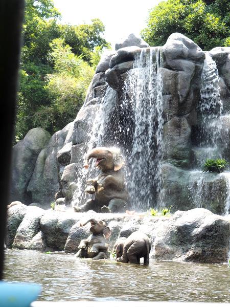 涼しげな象