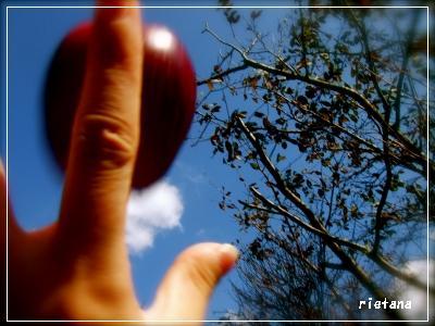 りんごそら.jpg