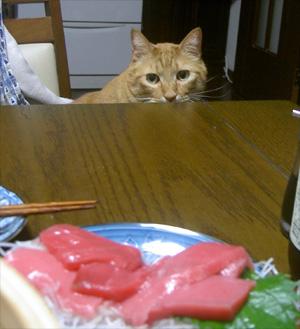猫 ねこ 写真