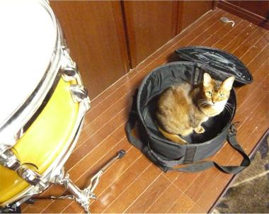 猫 写真 音楽