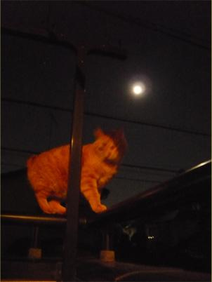 猫 写真 満月