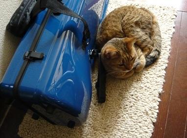 猫 トロンボーン 写真