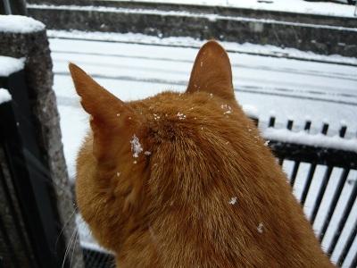 猫 写真 雪