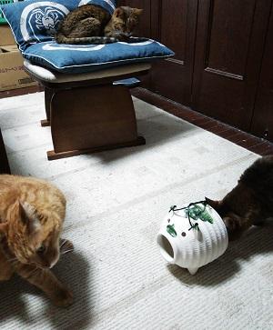 蚊やり豚 と 猫