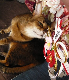 猫も寝正月