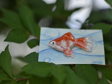 goldfish 01.jpg