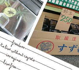 suzumushi.png