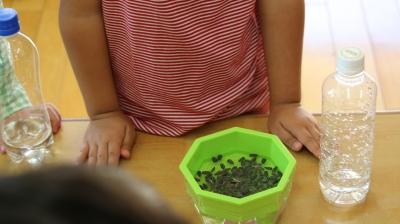 スプラウトを育てる食育プロジェクト3