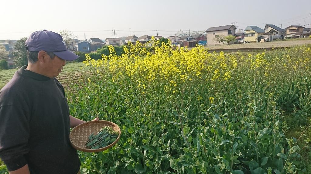 のらぼう菜種とり